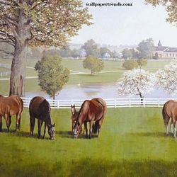 Horse Farm MuralFull Wall MuralRA0195MHorse Farm MuralFull Wall MuralRA0195M