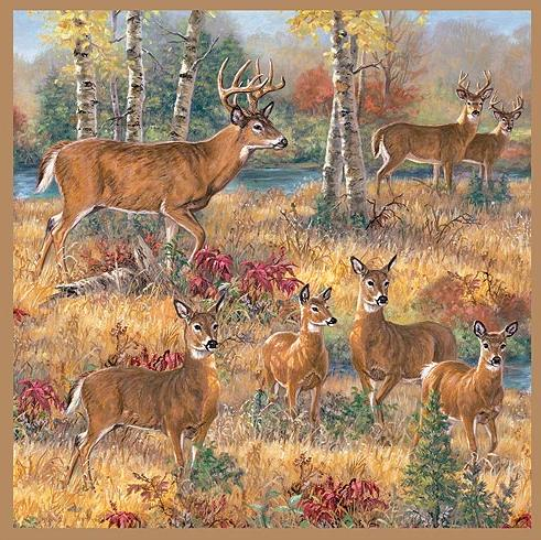 Deer Cabin  bathroom Shower Curtain