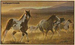 Desert Horse MuralChair Rail Wall MuralHJ6718MDesert Horse MuralChair Rail Wall MuralHJ6718M