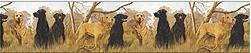 Hunting Dogs bathroom wallpaper borders