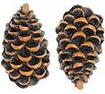Pinecone Lodge Kitchen Decor Drawer Pulls