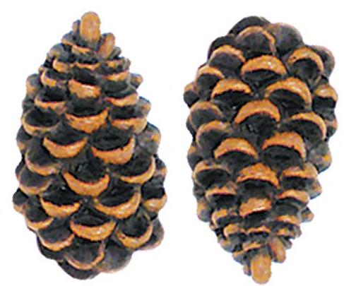 Pine Cone Lodge  bathroom Bathroom Drawer Pulls